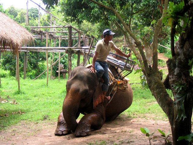 Mahut con su elefante