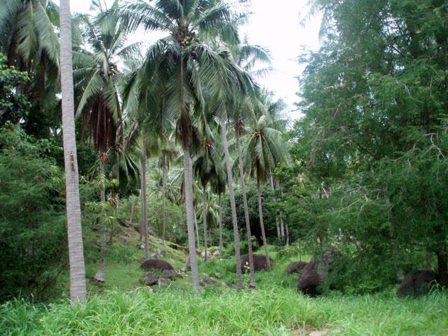 Interior de la isla (fotos koh tao)