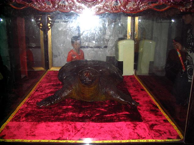 Tortuga disecada en el templo