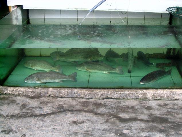 Pescado que comer en Cat Ba