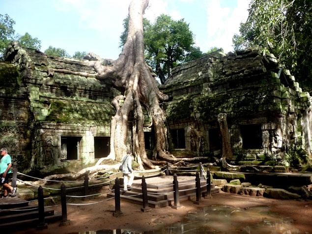 Templo de las raices , que ver en los templos de Angkor
