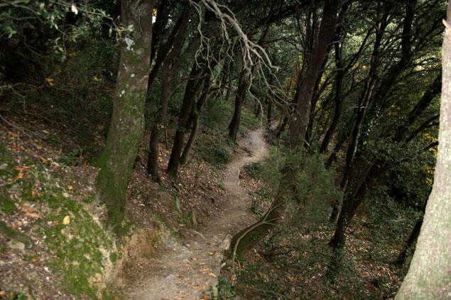 Caminando por un bosque fascinante