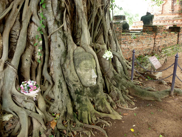 Cabeza de Buda entre raíces