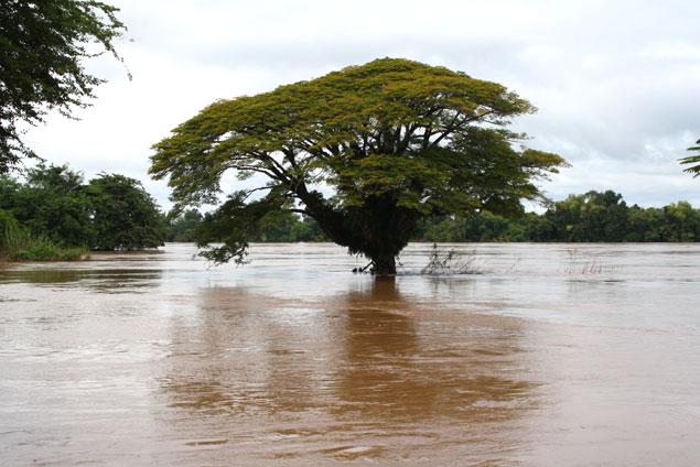Arbol en medio del río