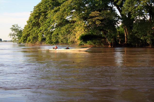 Vida en el río