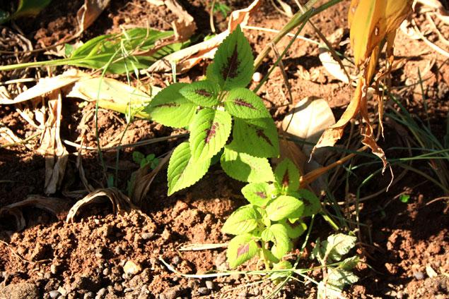 Planta en el spice garden