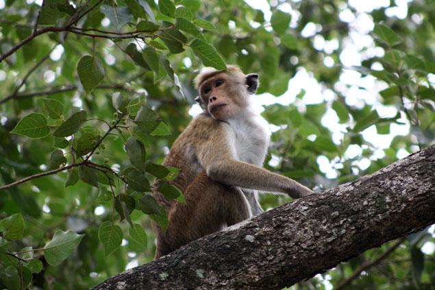 Mono atento a posibles restos de comida