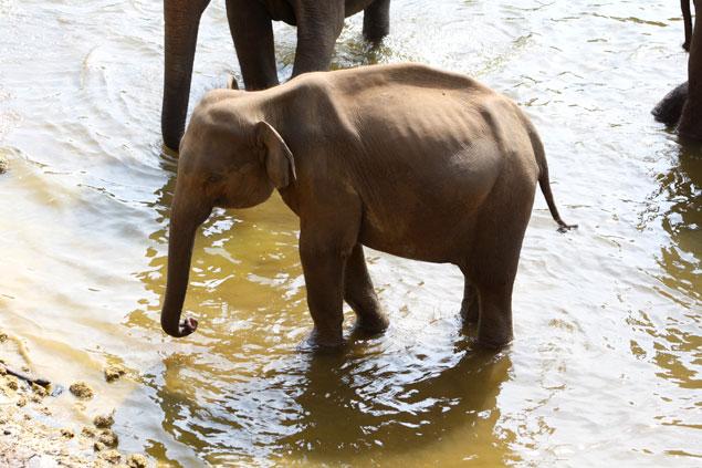 Jóven elefante