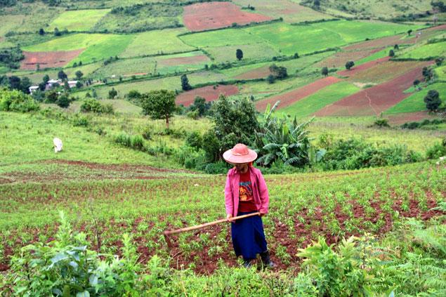 Dedicados a la agricultura