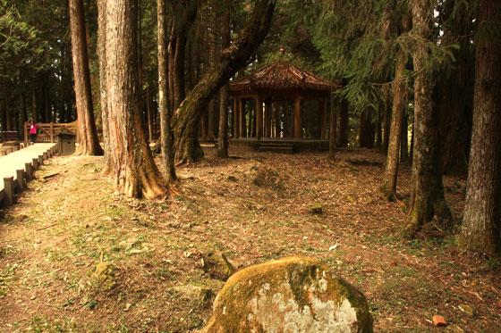 Itinerario por Taiwan , Bosque de Alishan