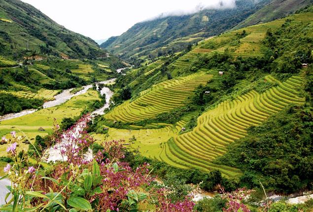 Arrozales de Lao Cai