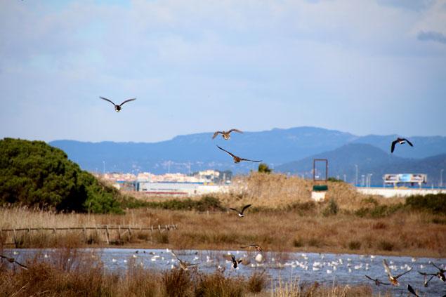 Zona de aves