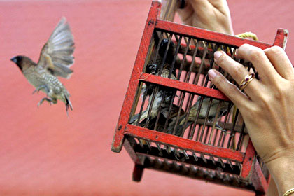 Soltando aves