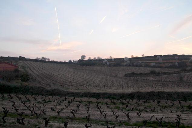 Zona de viñedos