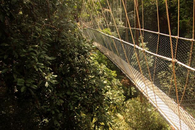 Puentes en los arboles en el Taman Negara