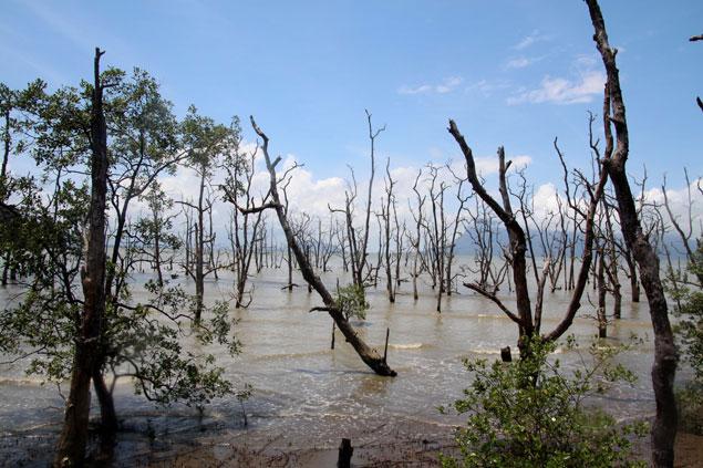 Los manglares abundan en Borneo