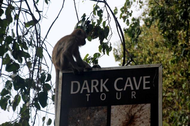Macaco sobre panel de la cueva Dark Cave