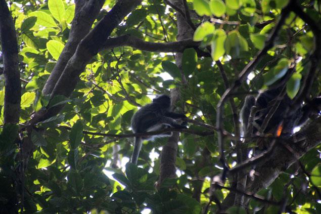 Mono en libertad