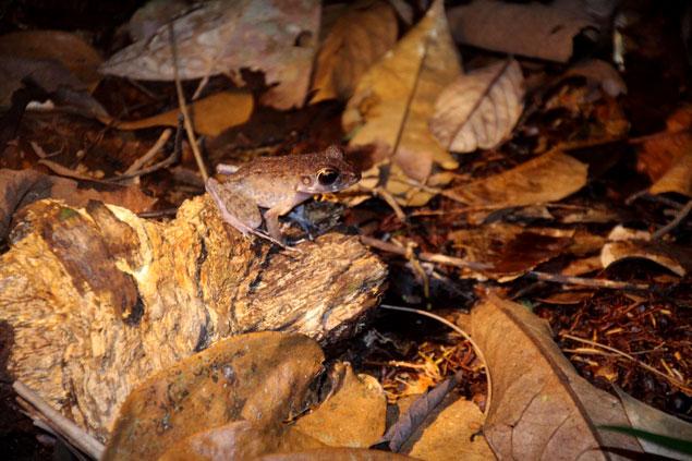 Fauna nocturna