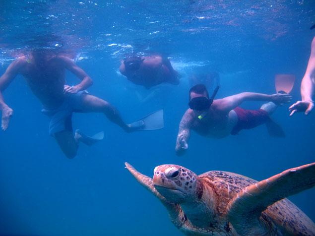 Asedio a las tortugas (que hacer en las islas Perhentian)