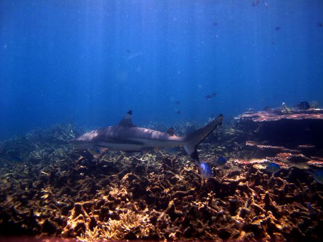shark point (que hacer en las islas perhentian)