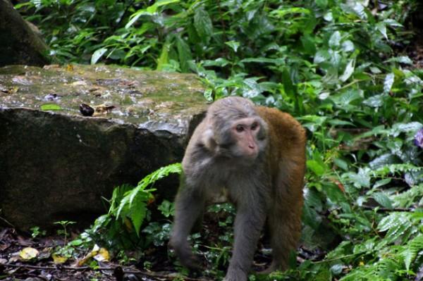 Mono en el camino