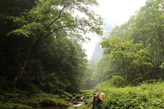 zhangjiajie , un paisaje único en China