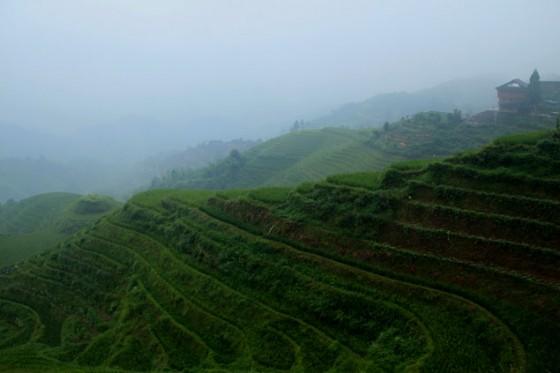 arrozales de Longji