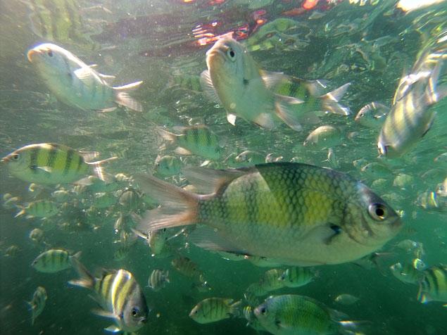 Fauna marina en alrededores de Railay