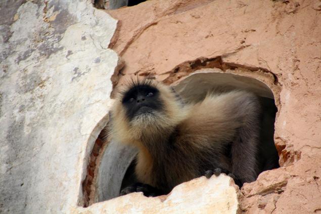 Mono deambulando a sus anchas