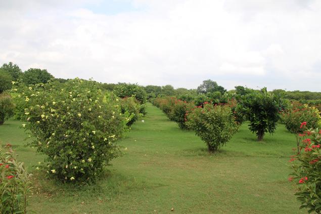 Jardines Mehtab Bagh