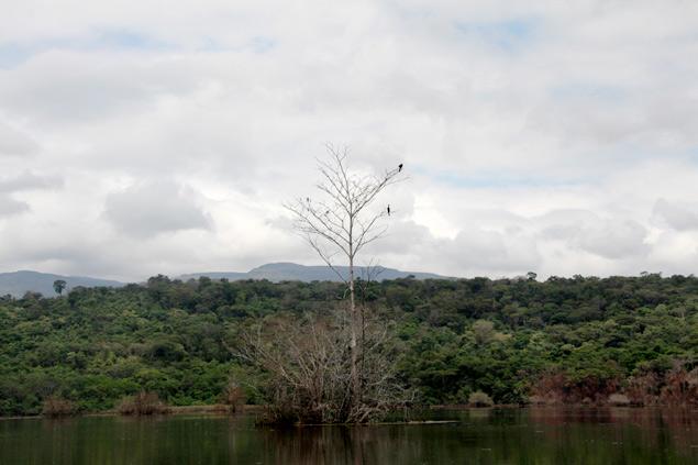 Hábitat de decenas de especies de aves