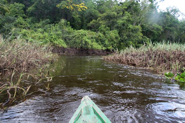 Paseando en canoa por el humedal