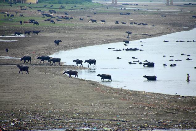 El Yamuna , elemento esencial que ver en Agra
