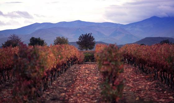 Tierra de viñedos