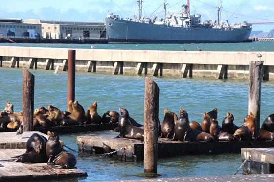 Inquilinos del Pier 39