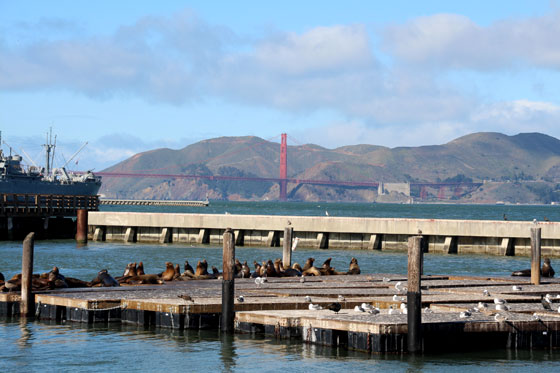 El muelle 39 con sus leones marinos y al fondo el icono de la ciudad el Golden Gate!