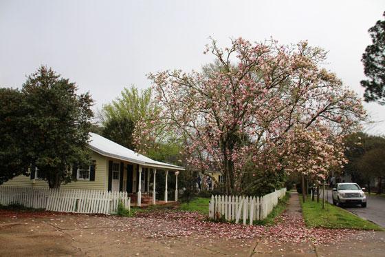Una casa cualquiera de Saint Francisville