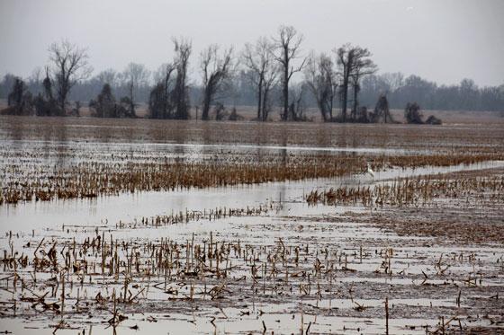 Paisajes del delta del Misisipi (Ruta por el sur de USA)