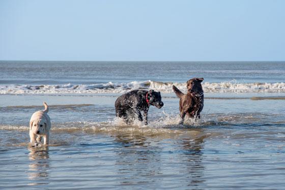 Perros jugando en esta famosa playa de Miami