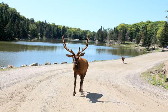 Ruta por Canadá con nños , Parc Omega