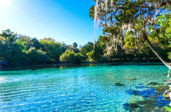 Paraíso en Orlando