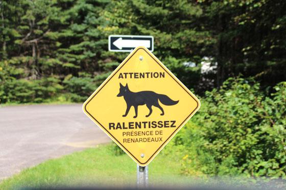 Viajar en coche por Canadá , animales en el camino