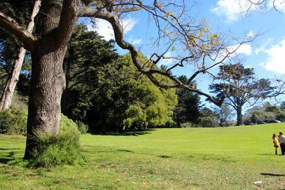 El golden gate park , un pulmón que ver en San Francisco