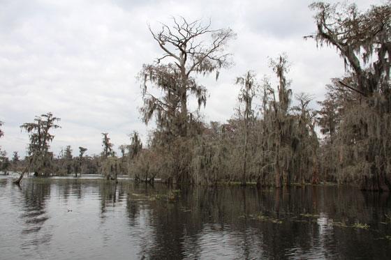 Pantanos de Nueva Orleans , un paisaje único y un tanto terrorífico