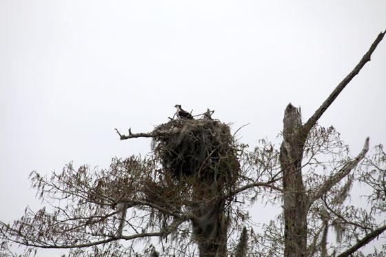Hábitat de cientos de aves (pantanos de Nueva Orleans)