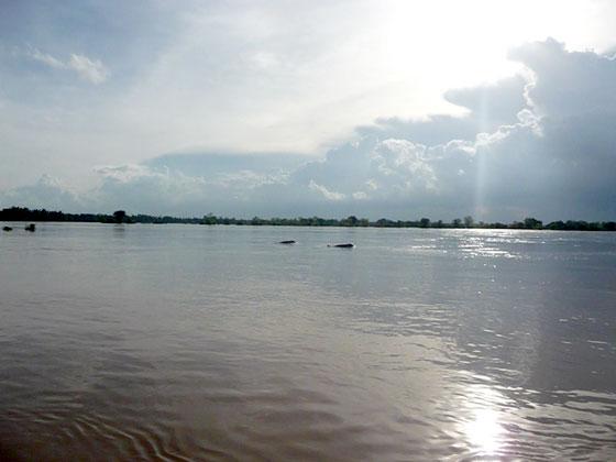 Los delfines de agua dulce Irrawaddy (Que ver y hacer en Si Phan Don)