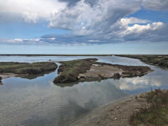 que  ver y hacer en el Delta de l'Ebre  , lagunas y aves y muchas actividades
