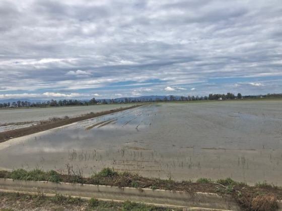 Campos de arroz del Delta del Ebro