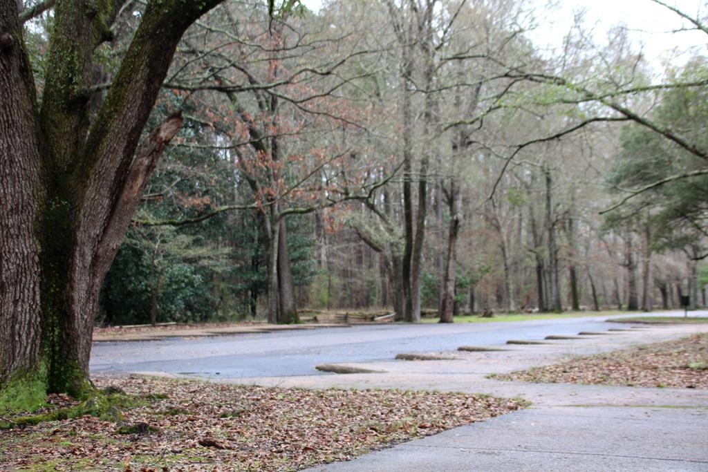 Bosques de Mississippi (Natchez Trace Parkway)